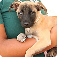 Adopt A Pet :: Melanie - Palmdale, CA