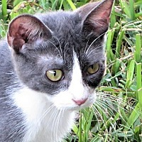 Adopt A Pet :: Buccee - Gonzales, TX