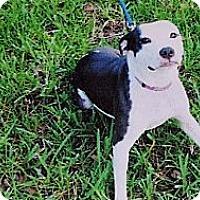 Adopt A Pet :: Girl2 - Chiefland, FL