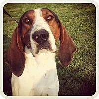 Adopt A Pet :: Henry - Louisville, KY