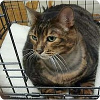 Adopt A Pet :: KaMer (TAH) - Little Falls, NJ