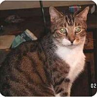 Adopt A Pet :: Bogey - Milford, OH