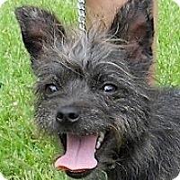 Adopt A Pet :: Mutton - Kingwood, TX