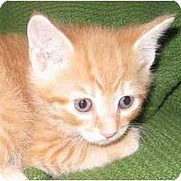 Adopt A Pet :: Gracie - Richmond, VA