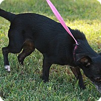 Adopt A Pet :: Lolita - Staunton, VA