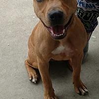 Adopt A Pet :: Rosie - Lakeland, FL