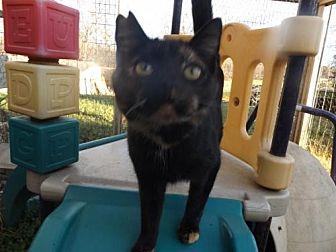 Domestic Shorthair Cat for adoption in Zaleski, Ohio - Tori