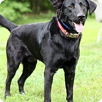 Adopt A Pet :: Casper - Waldorf, MD