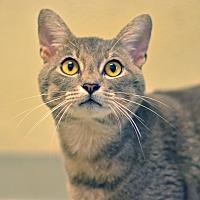 Adopt A Pet :: 10311929 - Brooksville, FL