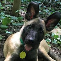 Adopt A Pet :: Winnie - Bowie, MD