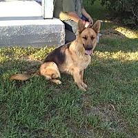 Adopt A Pet :: Athena - Colton, CA