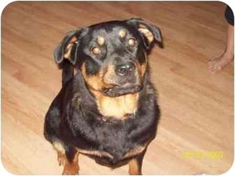 Rottweiler Mix Dog for adoption in Dunkirk, New York - Gigi