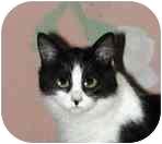 Domestic Mediumhair Kitten for adoption in Portland, Oregon - Lucky