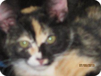 Calico Kitten for adoption in Concord, Georgia - Cassie