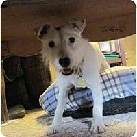 Adopt A Pet :: Joey #2 - Omaha, NE