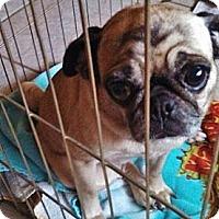 Adopt A Pet :: Marie - Silsbee, TX