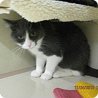 Adopt A Pet :: Paulie - West Dundee, IL
