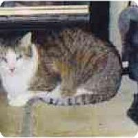 Adopt A Pet :: Sir Gawain - Fayette, MO