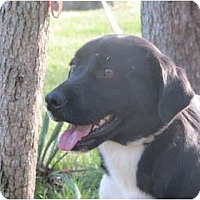 Adopt A Pet :: Amelia - Windham, NH