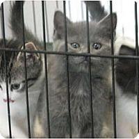 Adopt A Pet :: Last Litter of 2011 - Richfield, OH