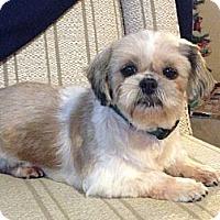 Adopt A Pet :: Phoebe - Hilliard, OH