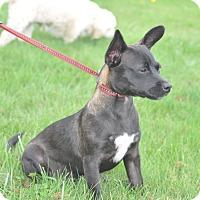 Adopt A Pet :: Miles - Tumwater, WA