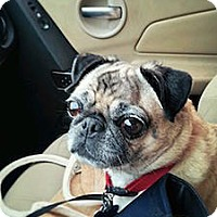 Adopt A Pet :: Emma - Austin, TX