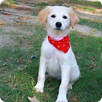 Adopt A Pet :: Kitia - Temple City, CA