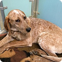 Adopt A Pet :: Sybil - Richmond, VA