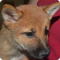 Adopt A Pet :: Peter Pan - Prole, IA