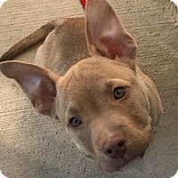 Adopt A Pet :: Carro - Dayton, OH