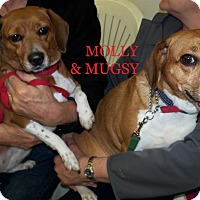 Adopt A Pet :: MOLLY & MUGSY - Ventnor City, NJ