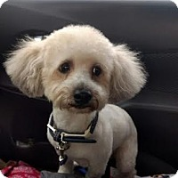 Adopt A Pet :: Mickey - Columbus, OH