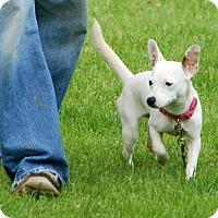 Adopt A Pet :: Yoyo - *Deaf* - Salamanca, NY