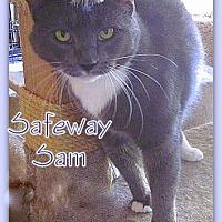 Adopt A Pet :: Safeway Sam - Culpeper, VA