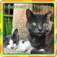 Adopt A Pet :: Beckett - Atco, NJ
