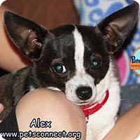 Adopt A Pet :: Alex - South Bend, IN