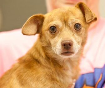 Mixed Breed (Small) Mix Dog for adoption in Cartersville, Georgia - Shriek