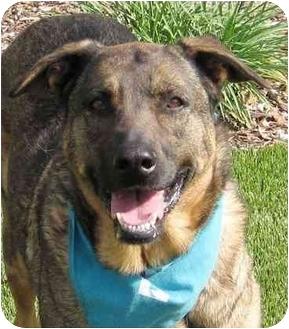 Shepherd (Unknown Type) Mix Dog for adoption in San Diego, California - Bonnie
