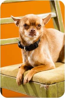 Chihuahua Dog for adoption in Portland, Oregon - Pedro