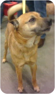 Shepherd (Unknown Type) Mix Dog for adoption in Loudonville, New York - Lorenzo