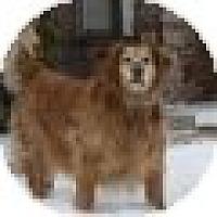 Adopt A Pet :: Natasha - Denver, CO