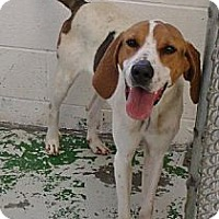 Adopt A Pet :: Margaret - Schererville, IN