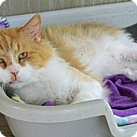 Adopt A Pet :: Cheesy - Dover, OH