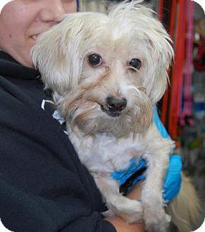 Terrier (Unknown Type, Medium) Mix Dog for adoption in Brooklyn, New York - Medussa