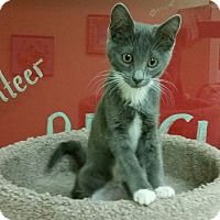 Adopt A Pet :: Dawn - Phoenix, AZ