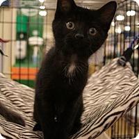 Adopt A Pet :: Delaney - Sacramento, CA