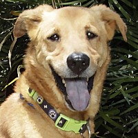 Adopt A Pet :: Howey - Fort Lauderdale, FL