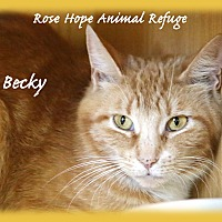 Adopt A Pet :: Becky - Waterbury, CT