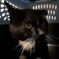 Adopt A Pet :: Scuttle - Edmonton, AB